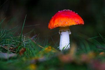 Champignons dans la forêt en automne sur Dirk van Egmond