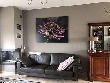 """Klantfoto: zeeuws knoopje in """"stomend licht"""" (bloem) van Marjolijn van den Berg"""