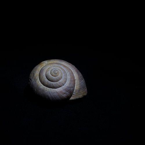 Progress in spirals van