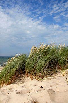 Sommerdünen von Ostsee Bilder