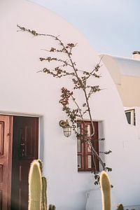 Wit Huis en Cactus van Patrycja Polechonska