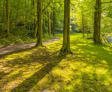 Zonnig parklandschap van Achim Prill