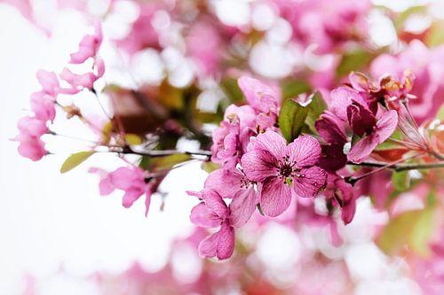 Voorjaar Gevoel van