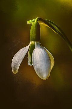 sneeuwklokjes lentezonnetje van natascha verbij