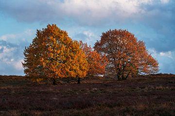 Groepje bomen zonsondergang Veluwe van Rick Kloekke