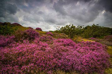 Bloeiende Heide 8 van Peter Heins