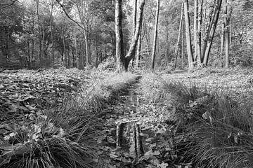 Beekje in het bos van