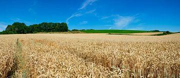 Limburgs landschap van Domenique van der Horst
