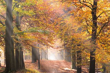 Zonnestralen in een bos in de herfst van