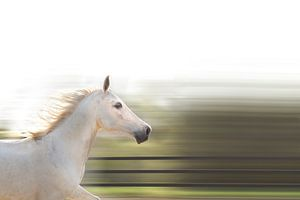 Laufendes Pferd von RuxiQue