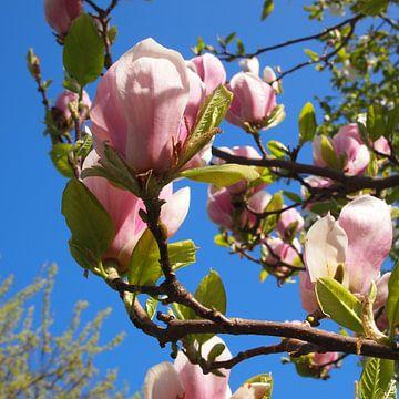 Magnolia Spring van Anne Eijsten