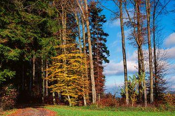 Colourful forest landscape in autumn. van Stefan Heesch