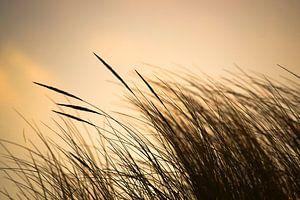 Strandgräser von Annette Sturm
