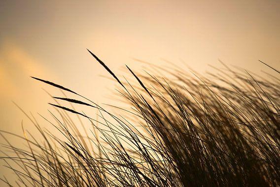 Strandgräser van Annette Sturm