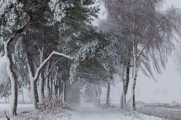 Sneeuw, wind en kou in de polder.