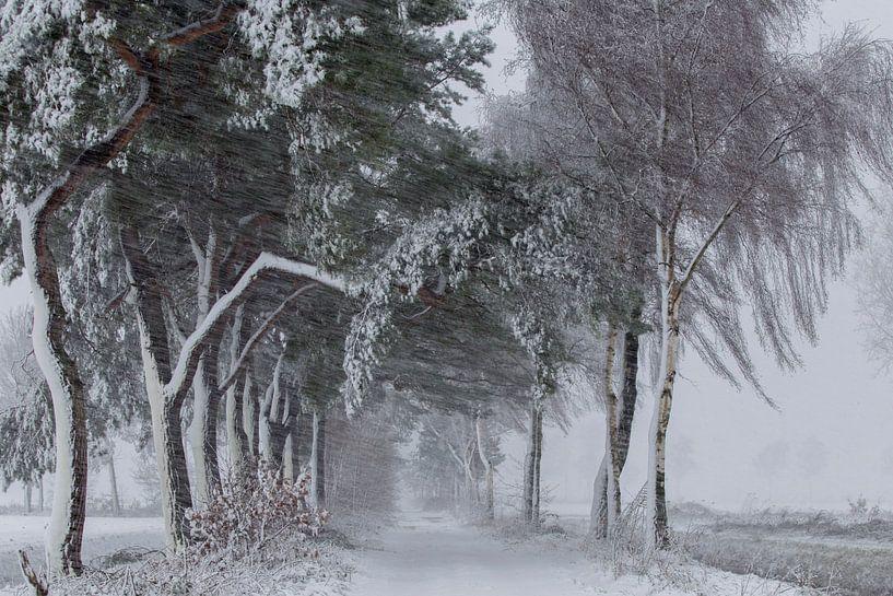 Sneeuw, wind en kou in de polder. van Paul Wendels