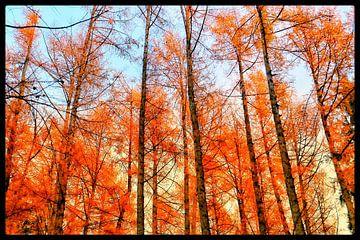 Woods on fire van Menno Bausch
