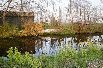 Lentekleuren in de polder (3) van André Hamerpagt