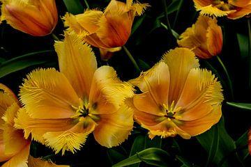 Tulpen in het groen sur