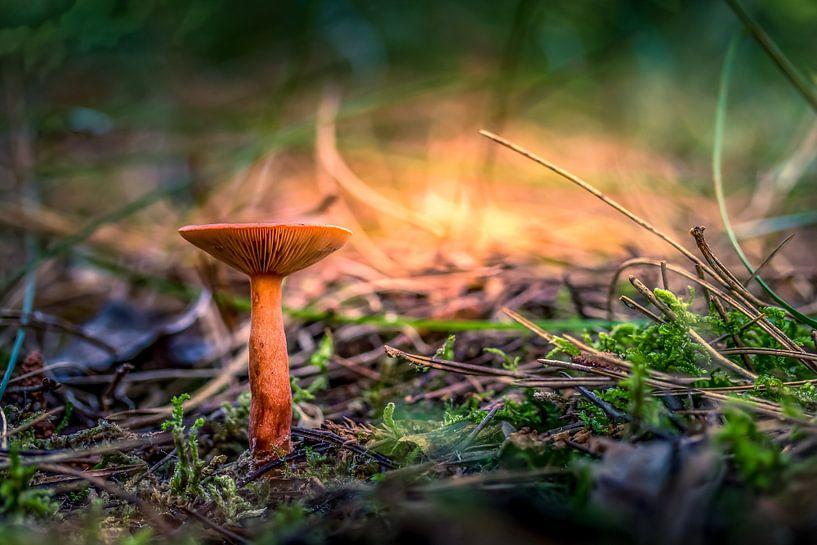 02 Tiny - Texel van Texel360Fotografie Richard Heerschap