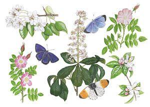 Blüten und Schmetterlinge