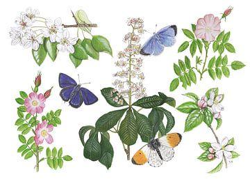 Bloesems en vlinders van Jasper de Ruiter