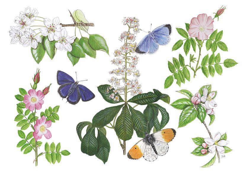 Blüten und Schmetterlinge von Jasper de Ruiter