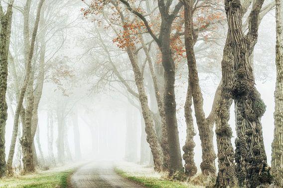 Akazien-Allee im Nebel von Lars van de Goor