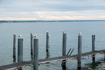 Meeuwen rusten uit op palen in het meer van Idema Media