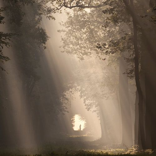 To the light... III von Anneke Hooijer