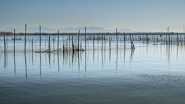 Fischen im Albufera-See von Frans Nijland