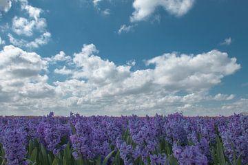 Het paarse Hoogeland van Astrid Ingrid Wevers