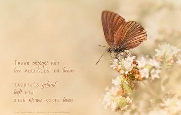Vlinder in het brons van Beeld en Poëzie