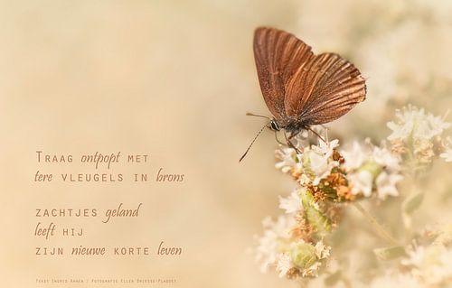Vlinder in het brons van