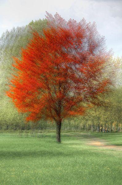 Seasons colors van Patrick LR Verbeeck
