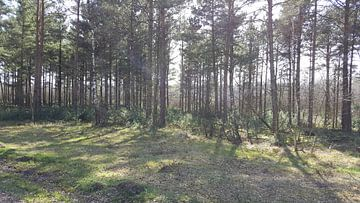 TREES FOREST SUN von Ivanovic Arndts