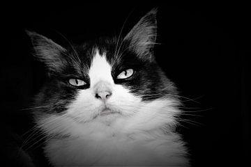 Wunderschönes Porträt einer langhaarigen Katze in Schwarz-Weiß von Maud De Vries