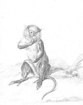 Sitzender Affe, der eine Frucht isst von Jean Bernard, 1775 - 1833