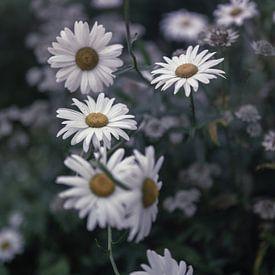 Blumen Teil 180 von Tania Perneel