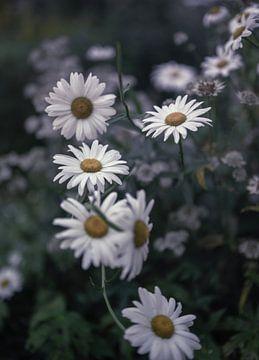 Blumen Teil 180