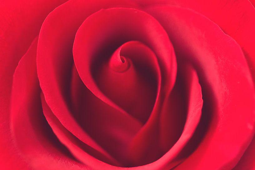 Rode Roos van Kimberly van Aalten