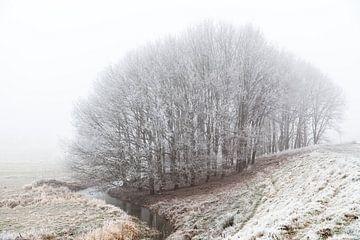 Wald von Diane Cruysberghs