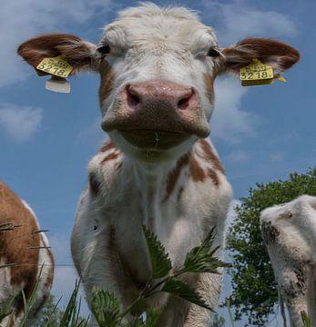 Koeienportret van Ans Bastiaanssen