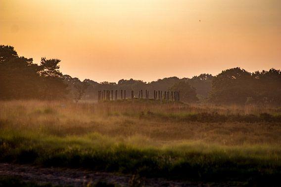 Grafheuvel de Regte Heide
