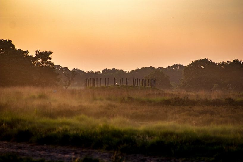 Grafheuvel de Regte Heide van Dennis Kluytmans