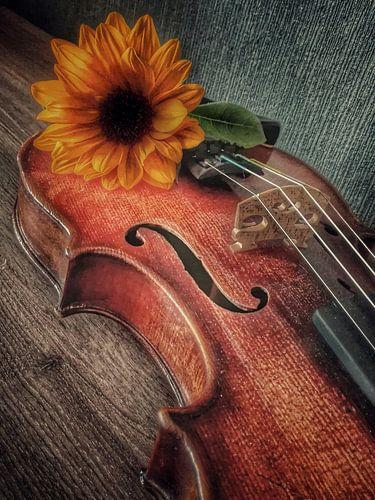 oude viool van