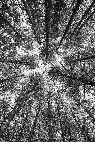 Bäume aus einer anderen Perspektive von Coby Bergsma