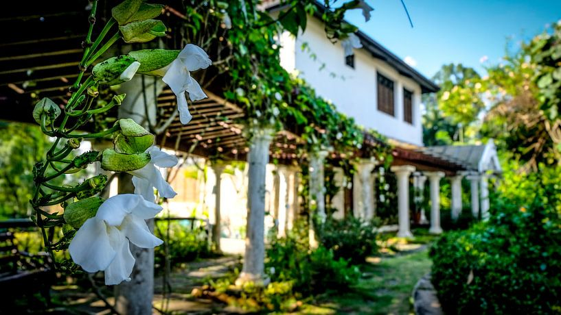 Ein Pavillion aus Orchideen von pixxelmixx