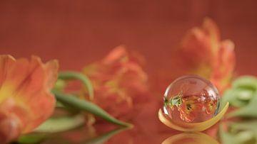 Tulpen in glas gevangen van Marianne Twijnstra-Gerrits