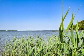 Natuurlijk strand, lagune in Lietzow, Great Jasmund Bodden, Rügen van GH Foto & Artdesign